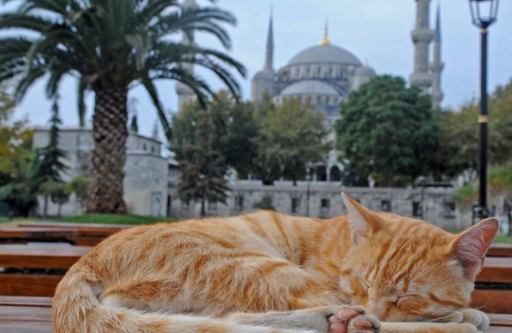 Türkei – Istanbul – 2012