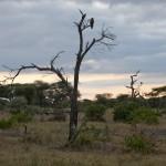 Tansania 2013_119