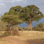Tansania 2013_127