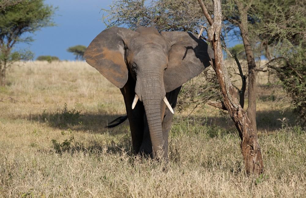 Tansania – Sansibar – 2013
