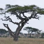 Tansania 2013_179