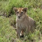 Tansania 2013_202