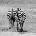Tansania 2013_234