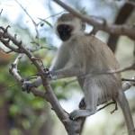 Tansania 2013_61