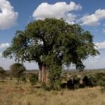 Tansania 2013_84