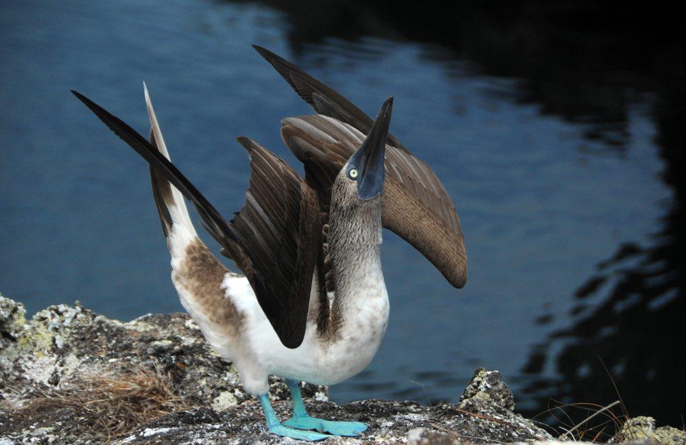 Ecuador – Galapagos – 2016 – Vögel