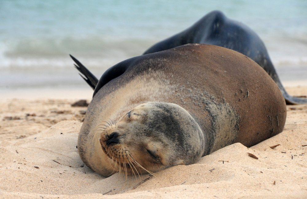 Ecuador – Galapagos – 2016 – Seelöwen
