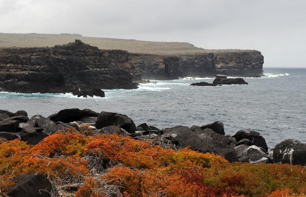 Ecuador – Galapagos – 2016 – Natur II