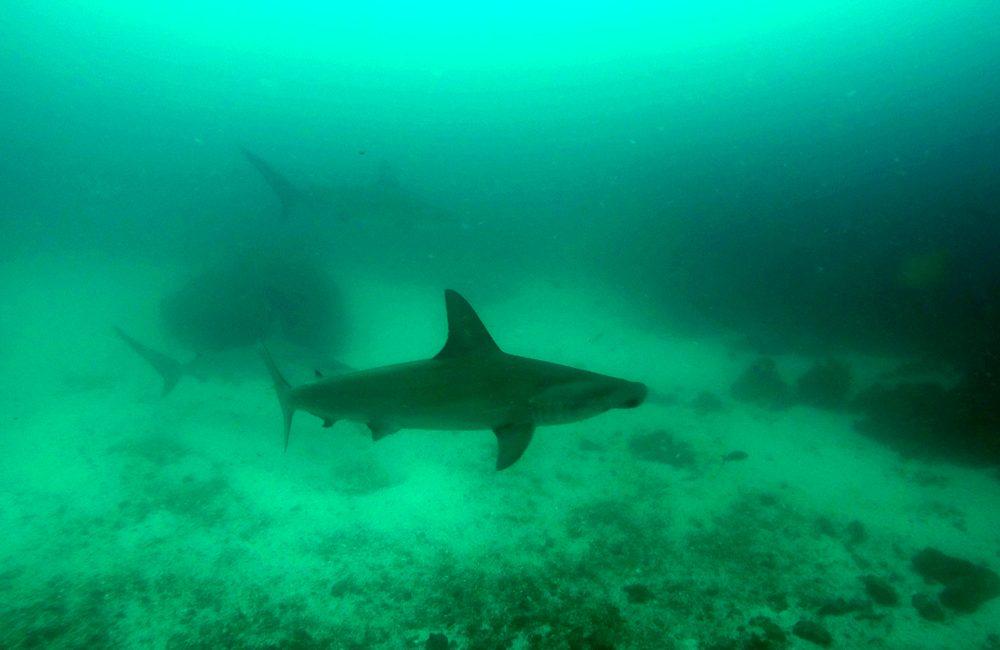 Ecuador – Galapagos – 2016 – Unterwasser