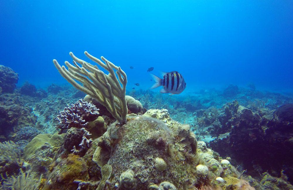 Mexiko – Unterwasser – 2017