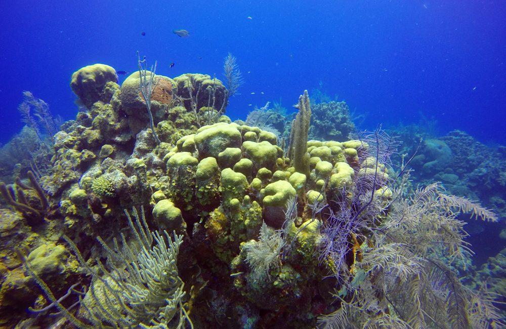 Belize – Unterwasser – 2017