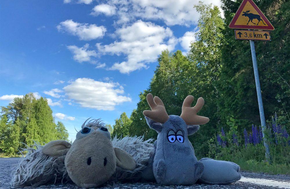 Sommer in Finnland!
