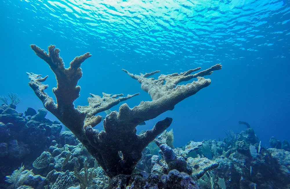 Honduras – Utila – Unterwasser – 2018
